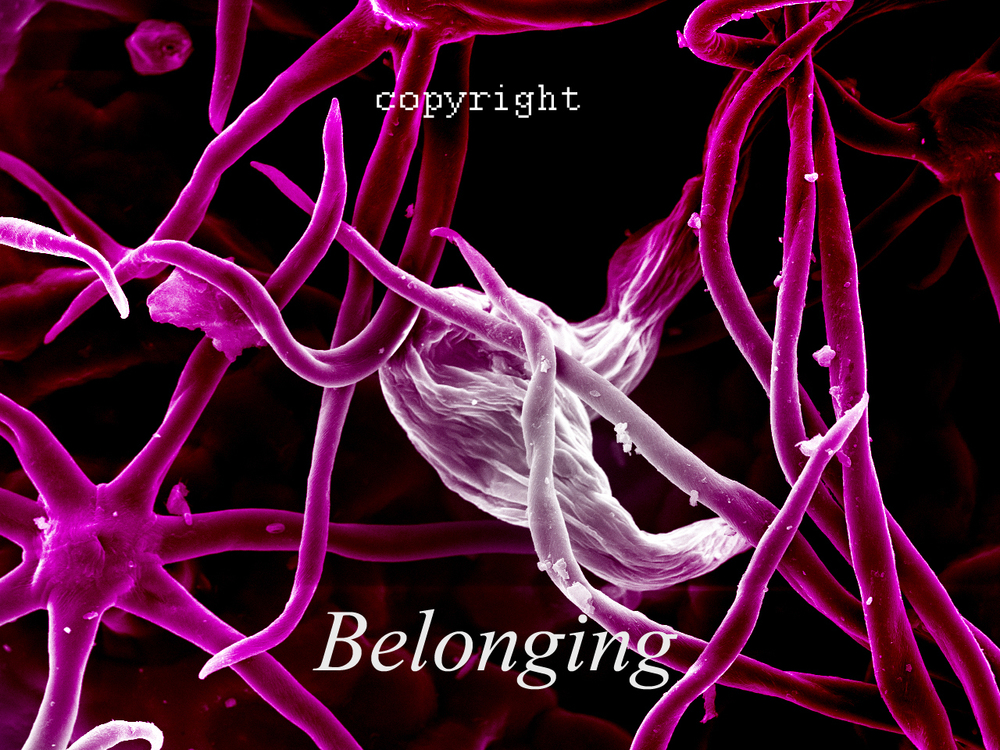 "Title: ""Belonging""    Medium:   Giclee Print on Metallic Paper (unframed)    Size: 80W X 50H    Price: $1200.00"