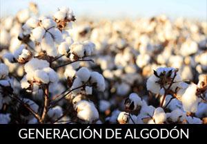 GENERACION DE ALGODON.jpg