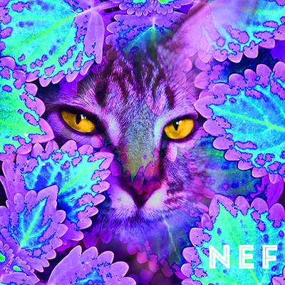 Nef (2015)   Perrin Grace