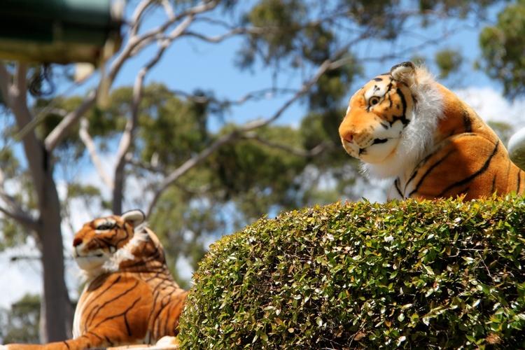 tiger_3.jpeg