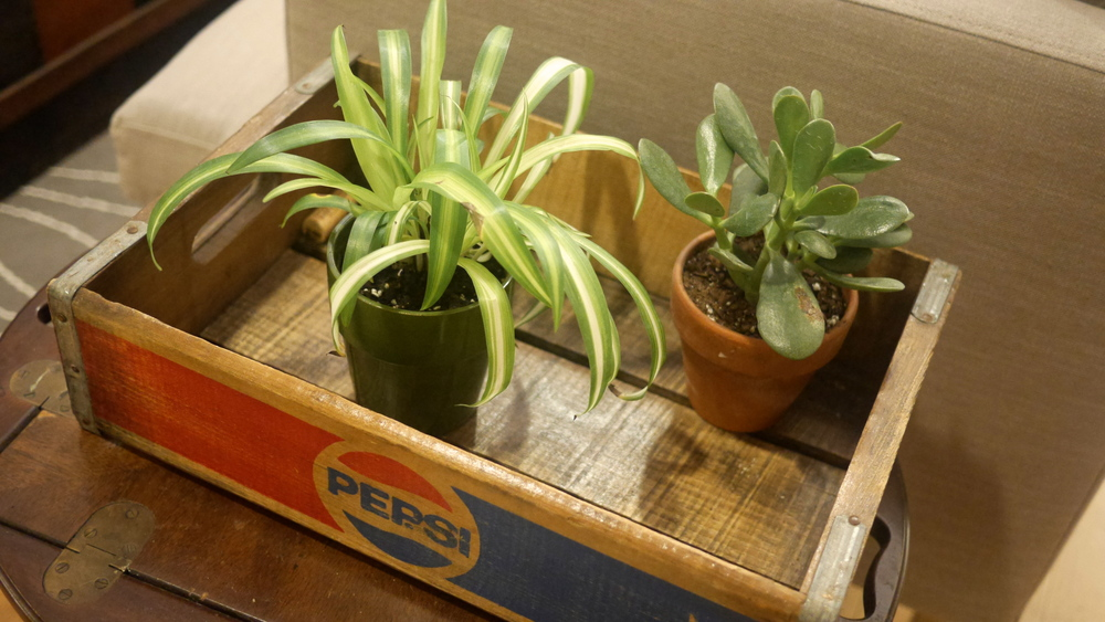 some lil plant guys in a flea market pepsi crate