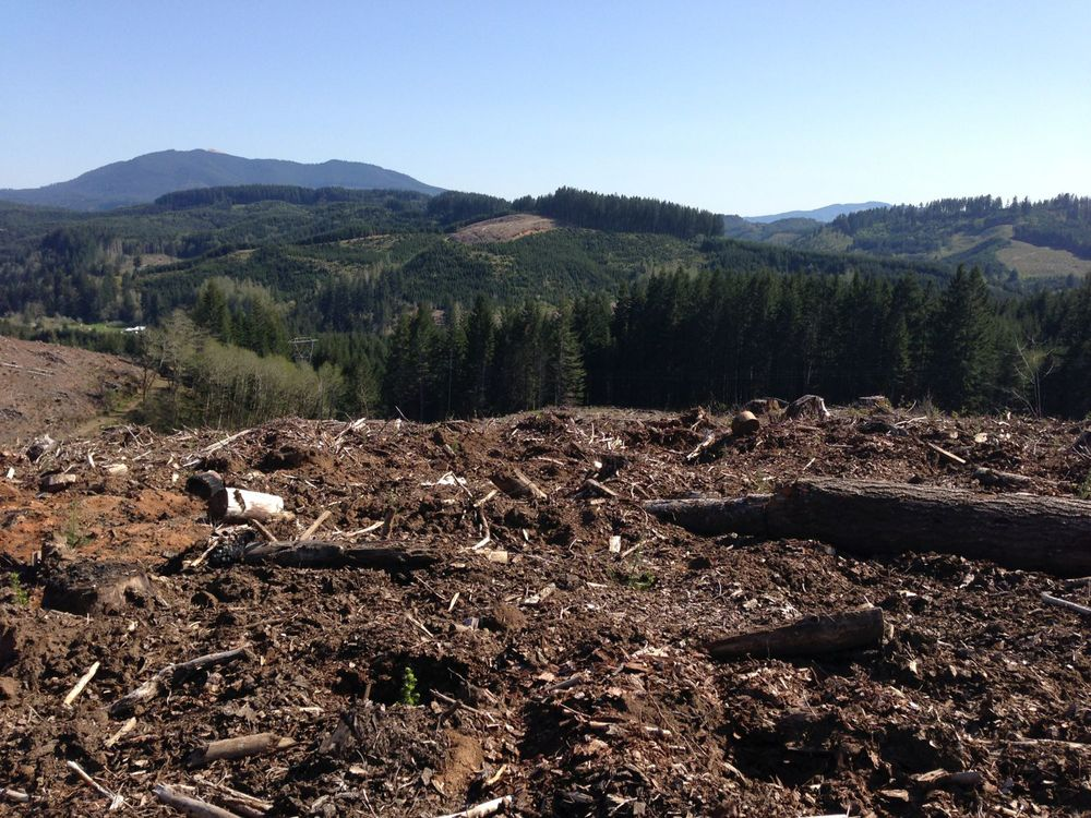 The view from the top of a clearcut area.