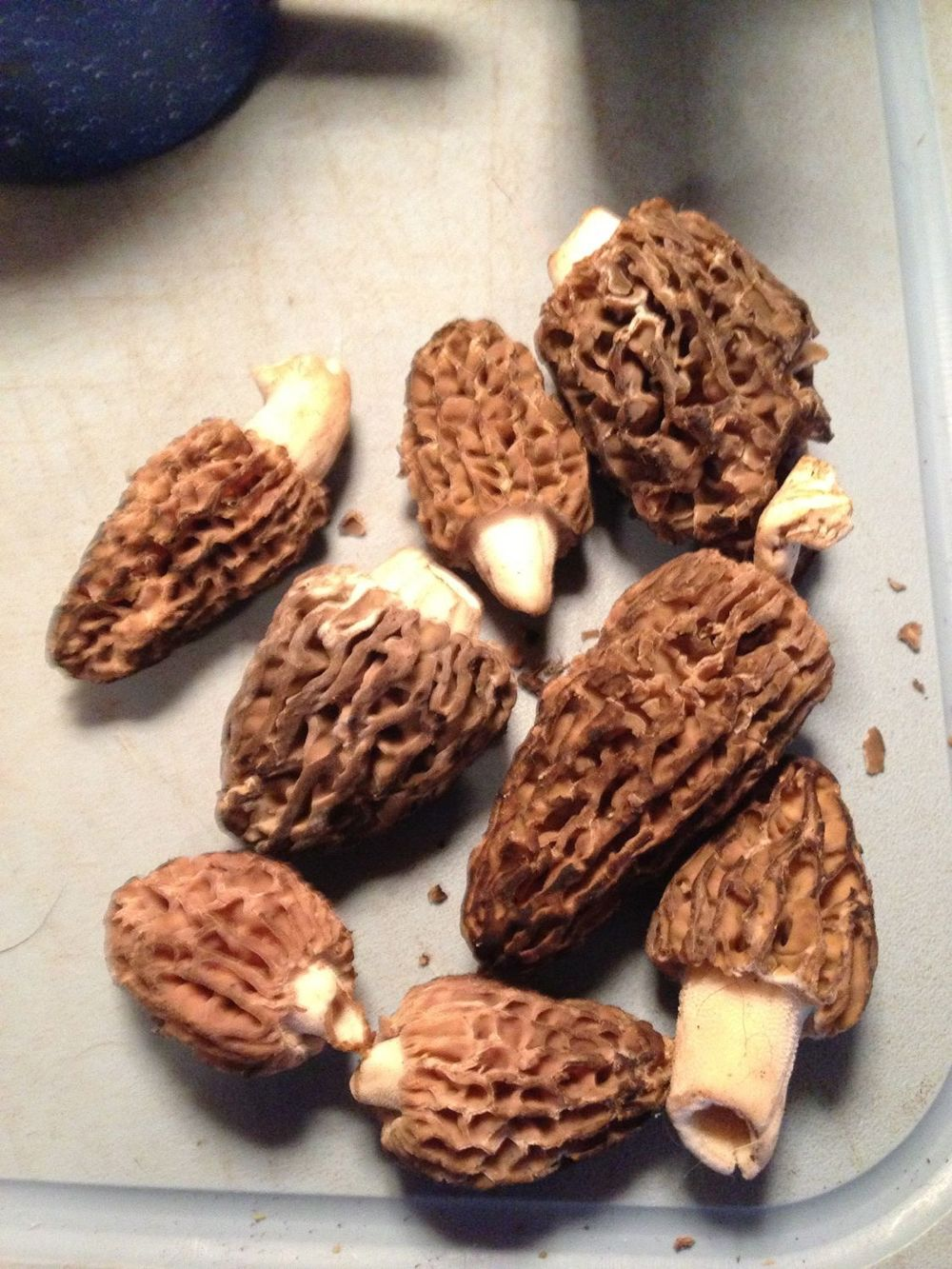 Some morel mushrooms. Yum!