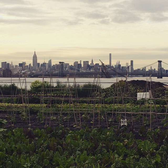 Today_s__outdoorfest_excursion__popupyoganyc_at_the_rooftop_farm__brooklyngrange.__Missing_the_farm__this_def_helped.__OFNYC15__swisschardoverkale_by_lyons_hearted.jpg
