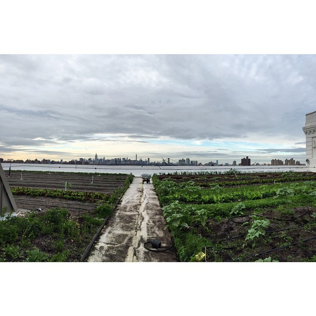Home__home_on_the_grange._Rooftop_yoga_with__outdoorfest____brooklyngrange__OFNYC15__TripPixApp_by_ali_bradley.jpg