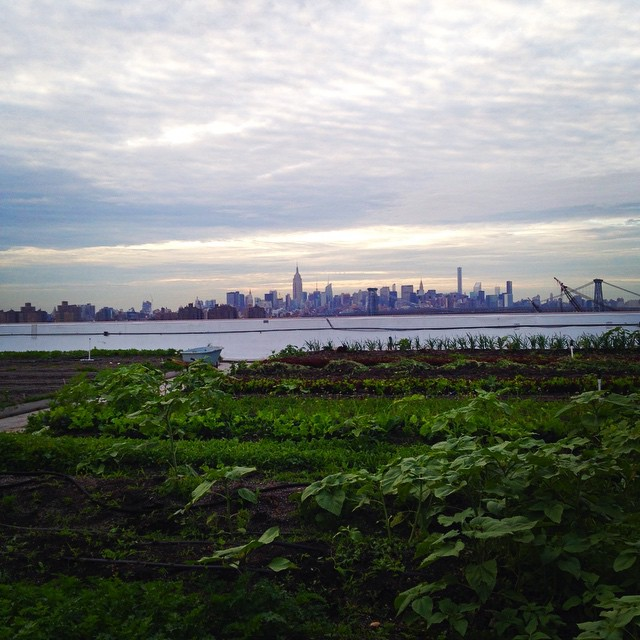A_round_of_rooftop_yoga_at__brooklyngrange_for__ofnyc15__Who_knew_there_was_so_much_fresh_air_in_the_city__trippixapp_by_sarahgrieco.jpg