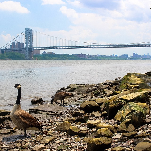 _nycmoments__The_view_of_the_George_Washington_Bridge_from_the_Hudson_River_shorefront__part_of_the_Palisades_Interstate_Park_in_New_Jersey._There_is_so_much_history_and_natural_beauty_within_these_woods__it_s_incredible._I_ll_be_writing_a_summary_on.jpg