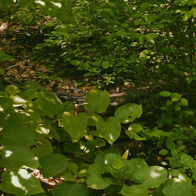 Can_you_spot_it_Also_I_really_want_to_win_this_contest_haha__birdbath__OFNYC15__TripPixApp__birds__nature__outdoorfest_by_vpventures.jpg