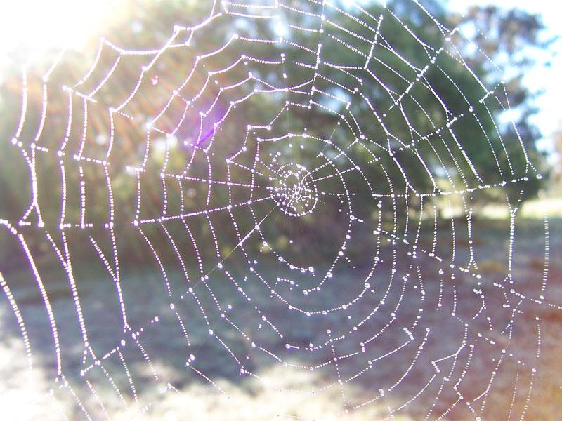 Five Beautifully Intricate Spider Webs You Could Mash Real Easy