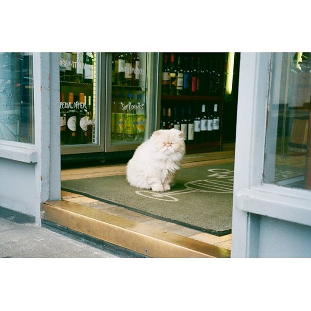 Somewhere in London 🐱 - UK, 2017 🇬🇧