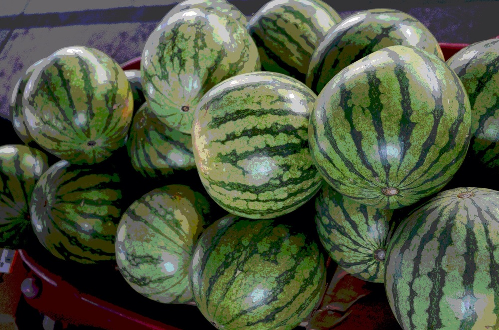 Watermelon from Dallas Farmers Market
