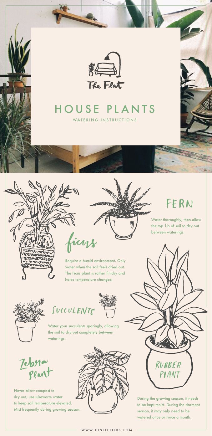 The Flat: House Plants Watering Instructions
