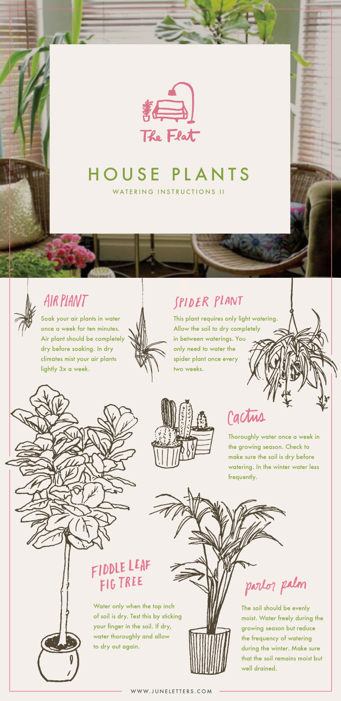 Air Plant Info Graphic 6