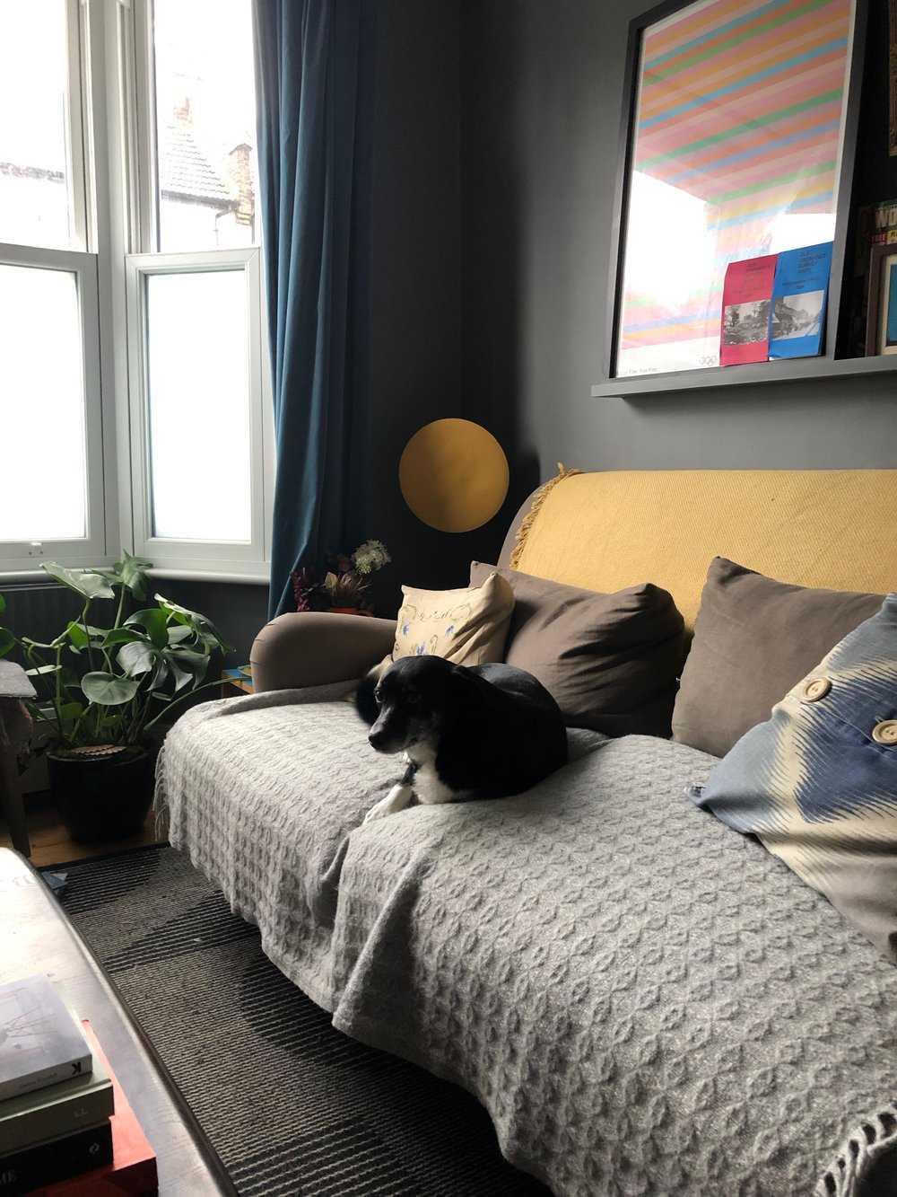 Our deliciously dark, small, north-facing living room, featuring our definitely-not-allowed-on-sofas rescue dog, Stella (photo ©  Joanna Thornhill )