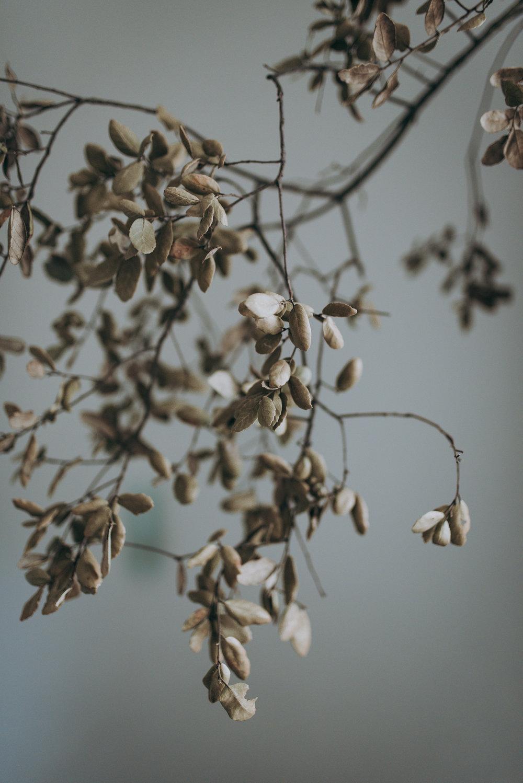 botanica_workshop_luminousphotography-10.jpg