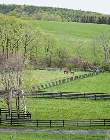 Greener-pastures-11-0809-de