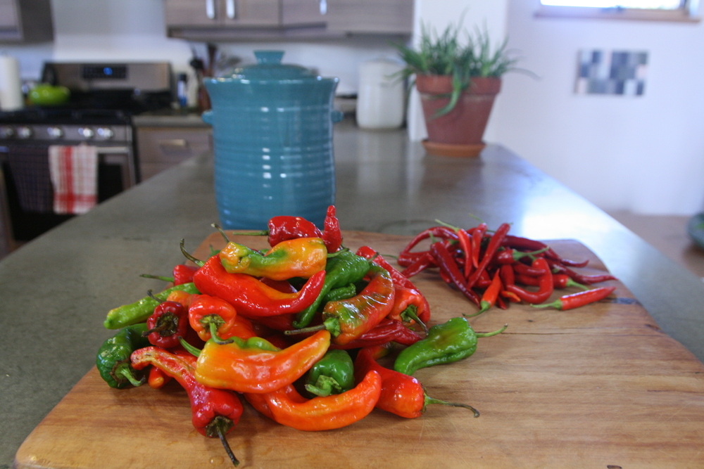 Heirloom peppers from Dixon, N.M., in foreground. Chile pequin and a Mudslide crock in background.