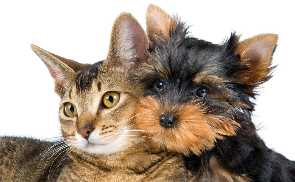 cats-wallpapers-fresh-desktop-animal-life-all-animals-cat-and-dog.jpg