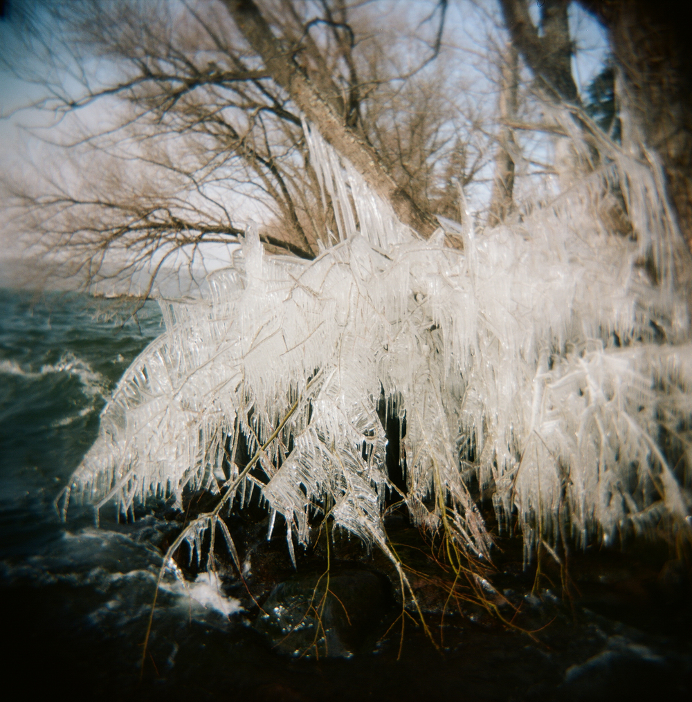 Frozen winter trees on the shore of Lake Superior