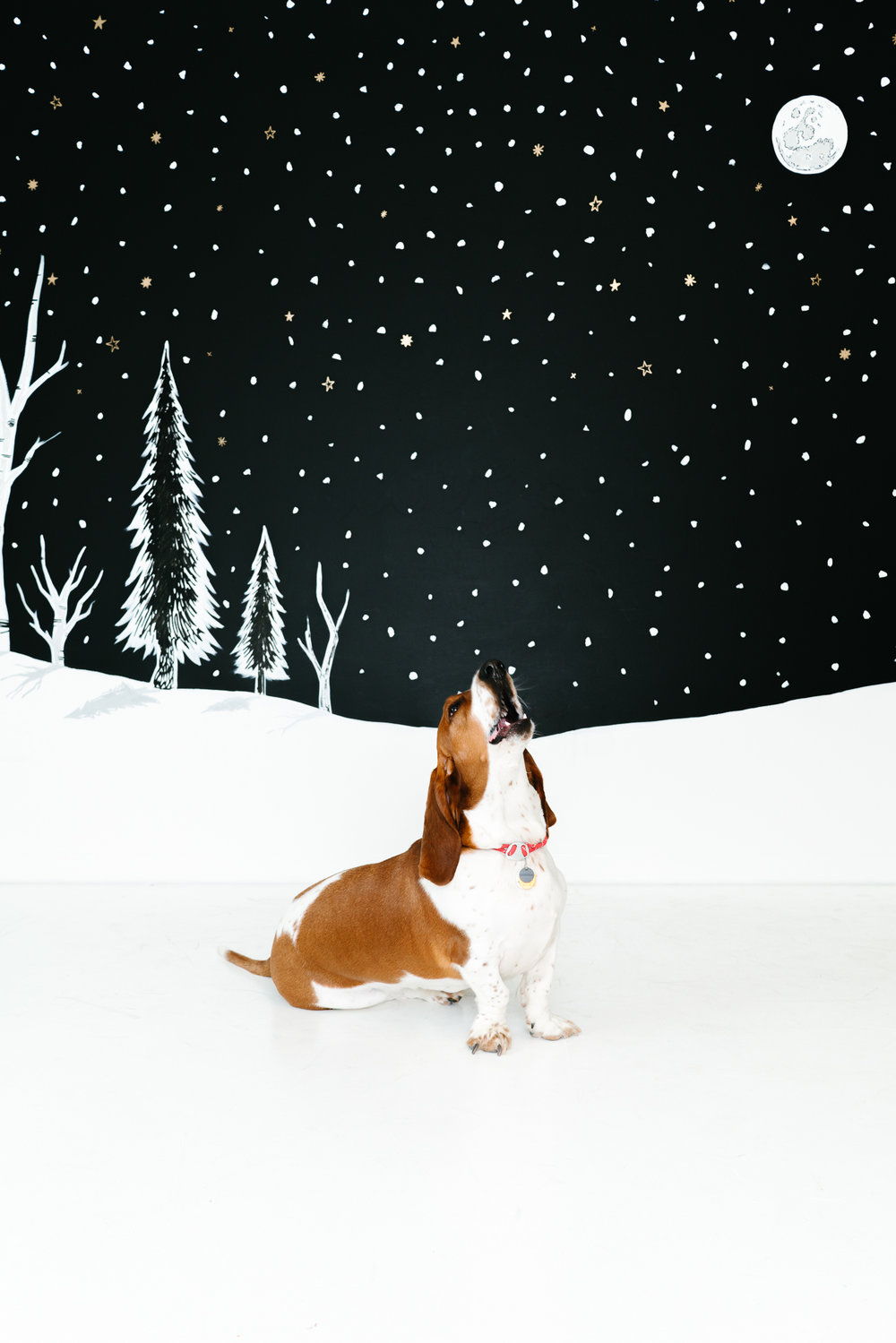 Minneapolis Modern Pet Photographer - Basset Hound