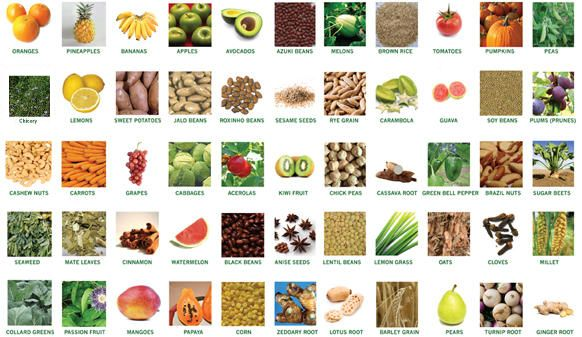 prebiotics-ingredients.jpg