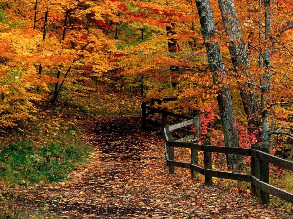 beautiful-fall-scene.jpg
