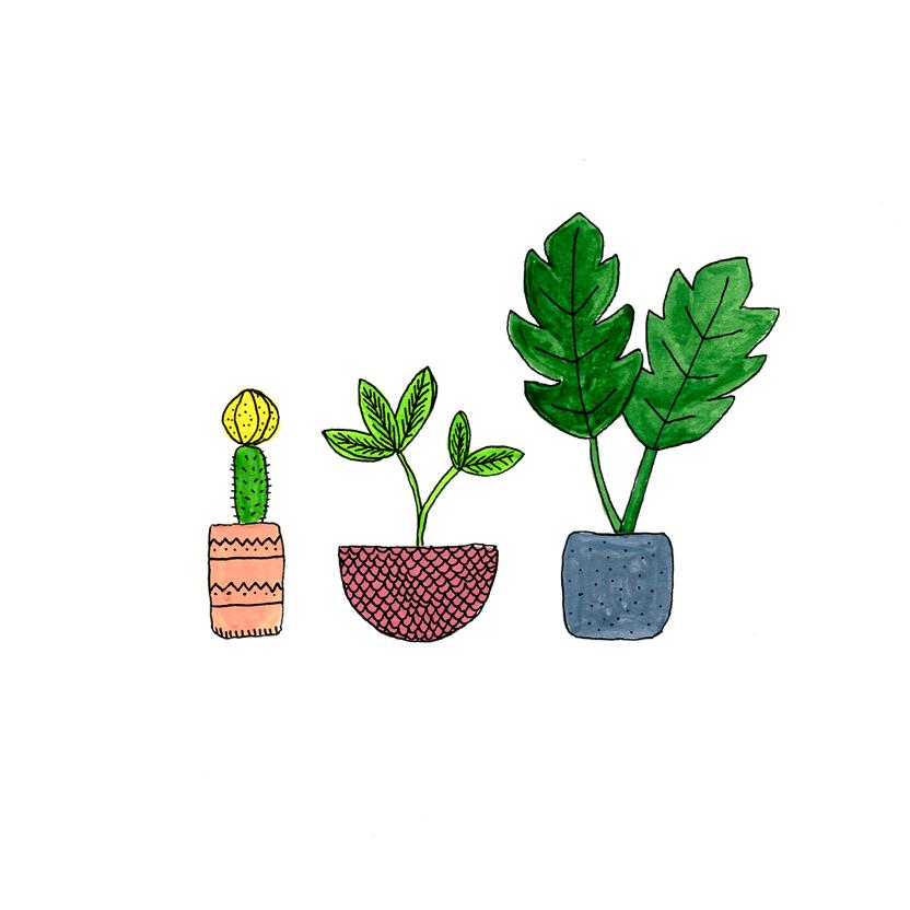 plants-008.png