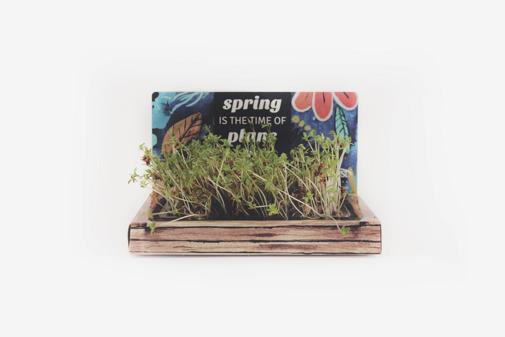 SpringMailer4.jpg