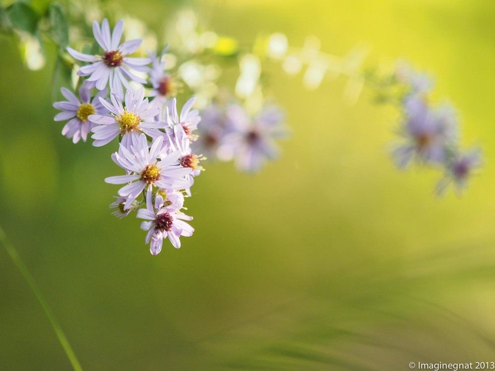 OAAT_FLOWER_092413.jpg