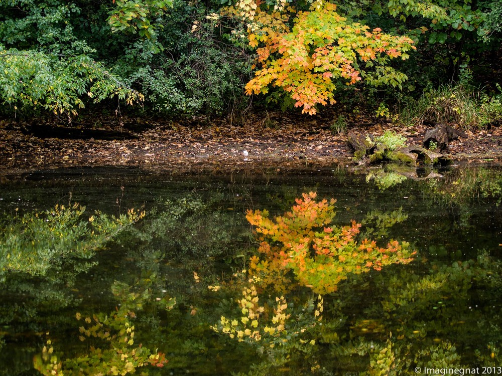 An autumn reflection - Off the beaten path at Lakefront Park in Prior Lake, MN