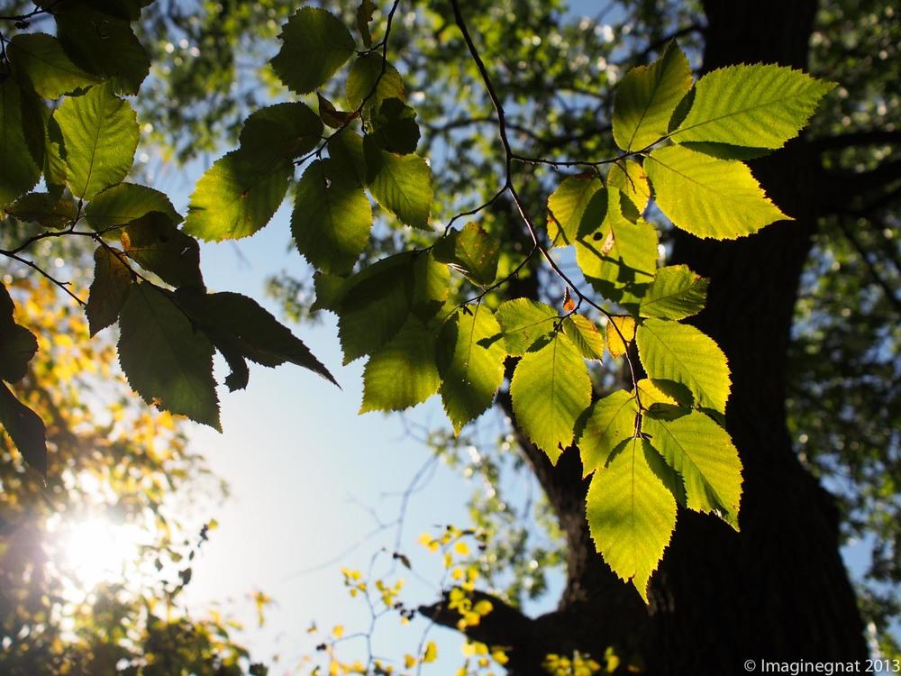 oaat_Oly17mmf1.8_Firstshots_6.jpg