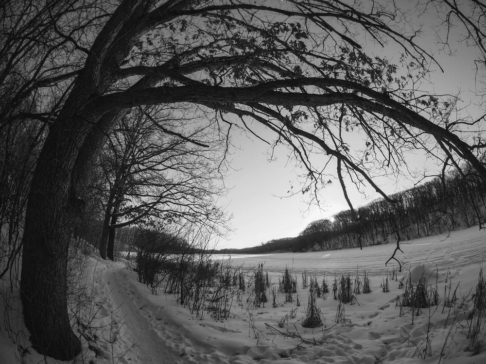 GNAT_Rokinon_1stshots_tree.jpg