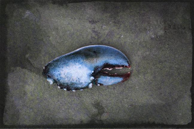bluelobster.jpg