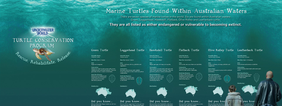 turtles-6.jpg