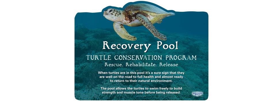 turtles-7.jpg