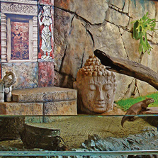 动物园和水族馆