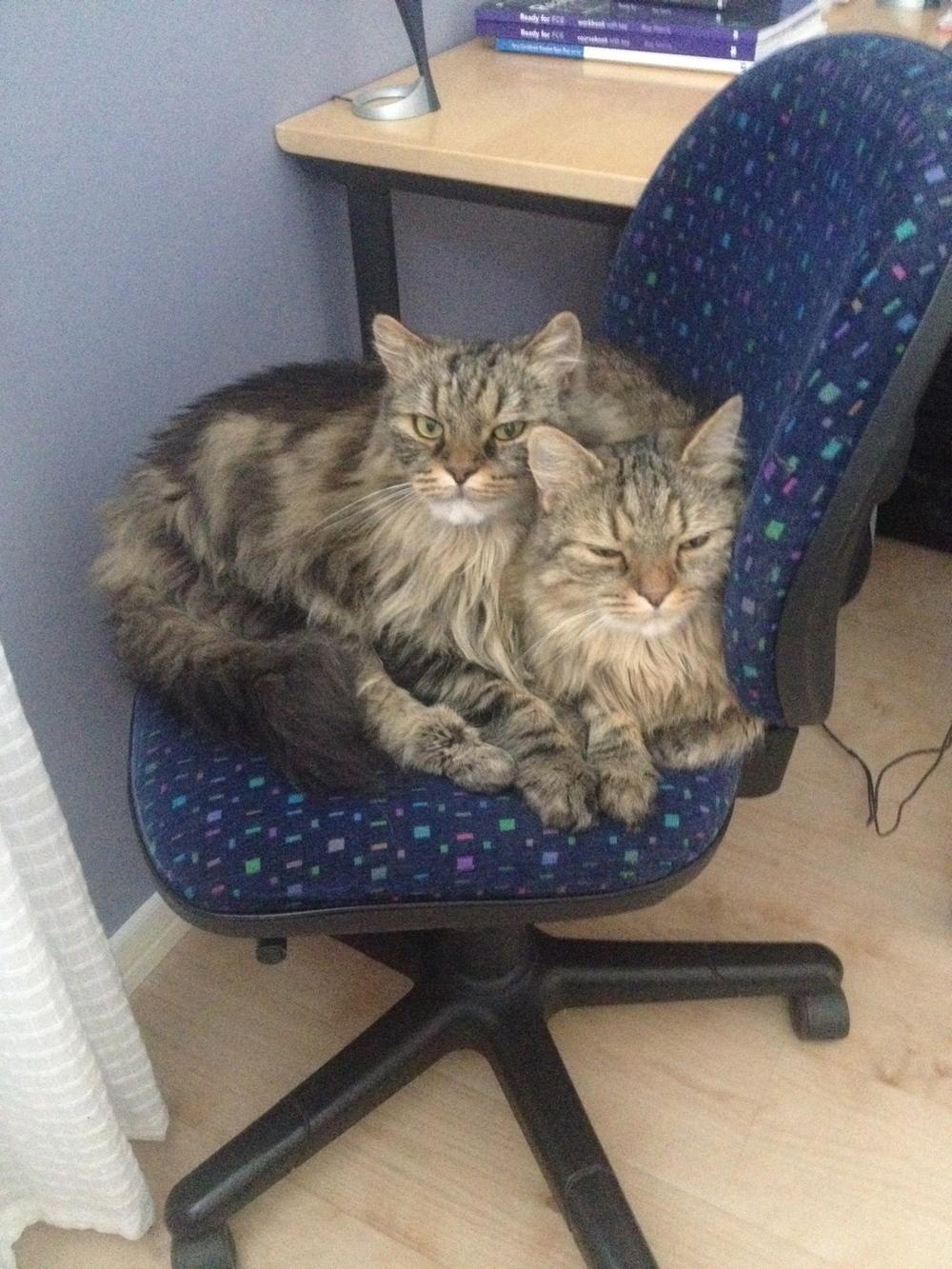 Och så Gotland. Jag fick bo hos Sannas mamma i Visby. Där bodde också dessa två godbitar - katterna Figaro och Frans.    Foto:  Palatsliv