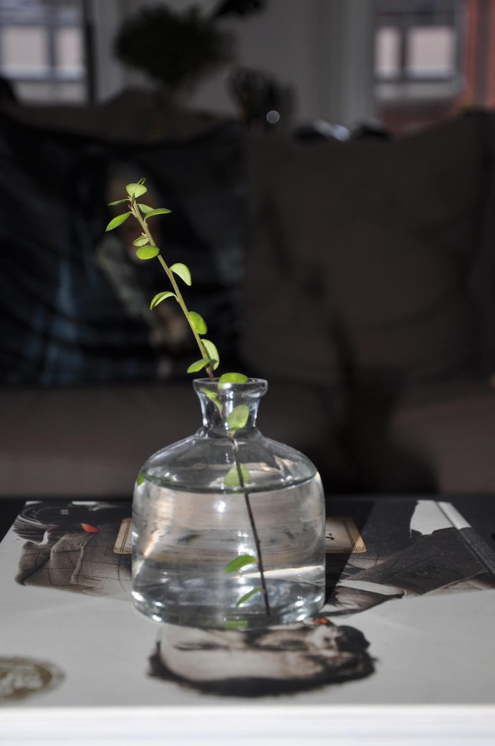 En liten grön kvist i en genomskinlig vas med vatten är vacker och ack så enkelt att ordna   Foto:  Palatsliv