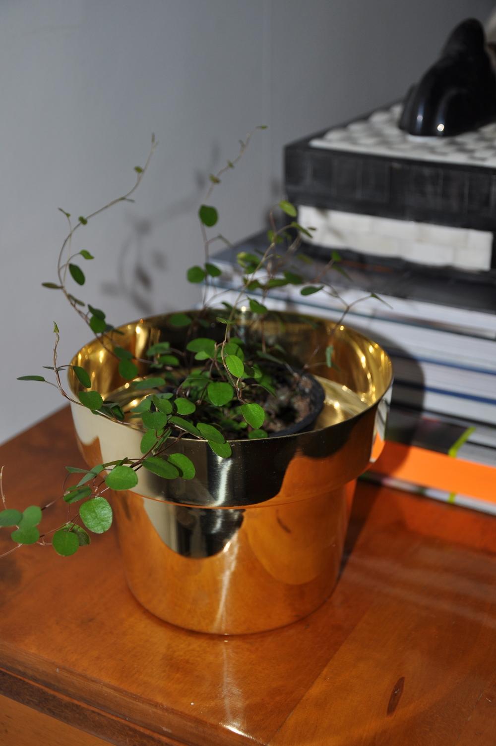 """Växten """"Plättar i luften"""" blir extra vacker i Skultunas kruka   Foto:  Palatsliv"""