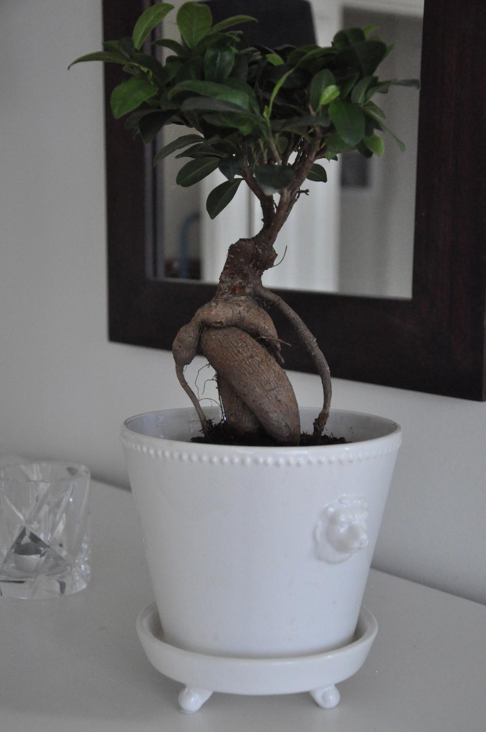 Ginseng på stam   Foto:  Palatsliv