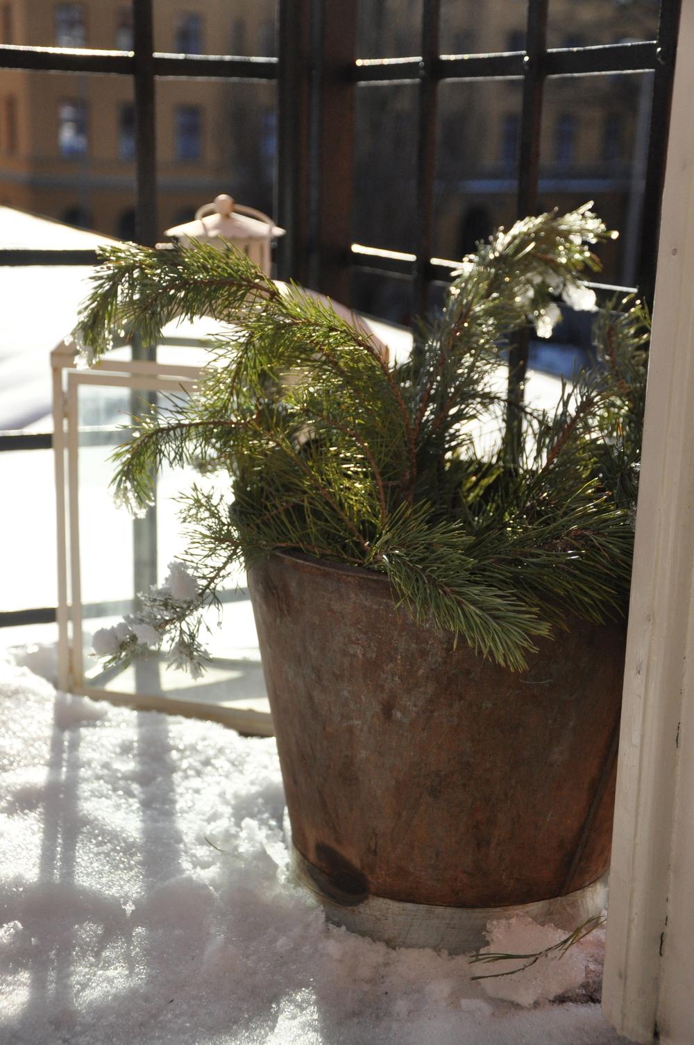 Balkongprydnad, ris i hink från Hedvigs Trädgård   Foto:  Palatsliv