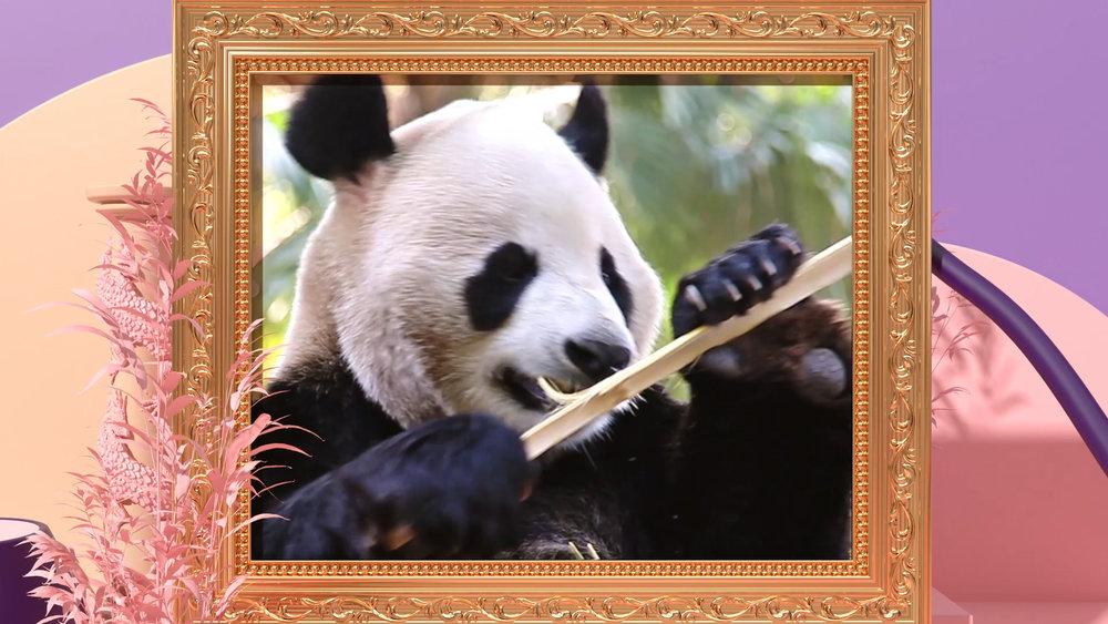 Wheyhey_02_Panda_1920x1080_25fps_h264.21.Still001.jpg