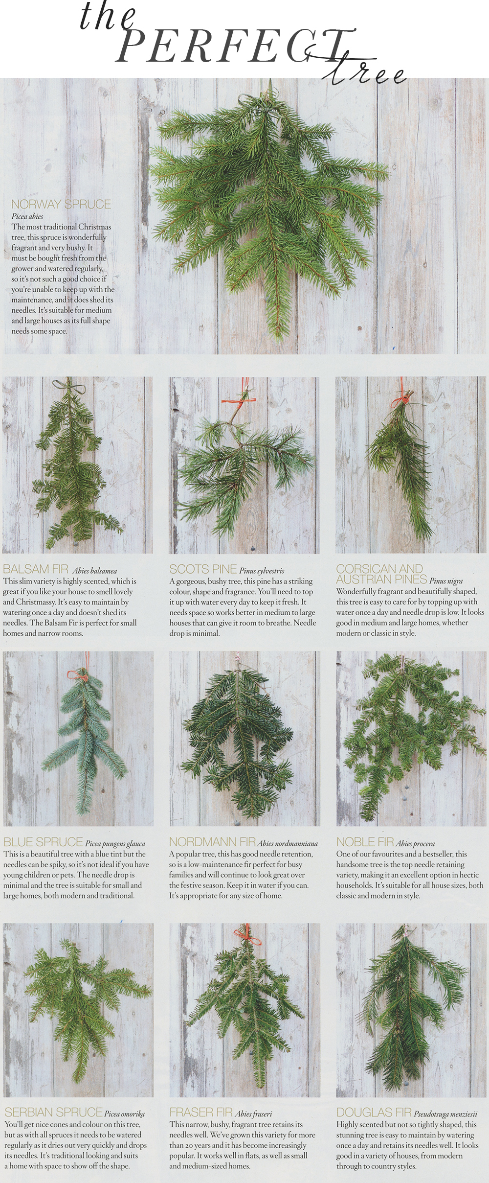 Different types of christmas trees pictures - Theperfecttree Jpg