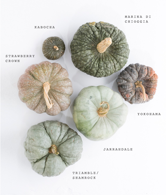 Autumn Inspiration : Heirloom Pumpkin Varieties