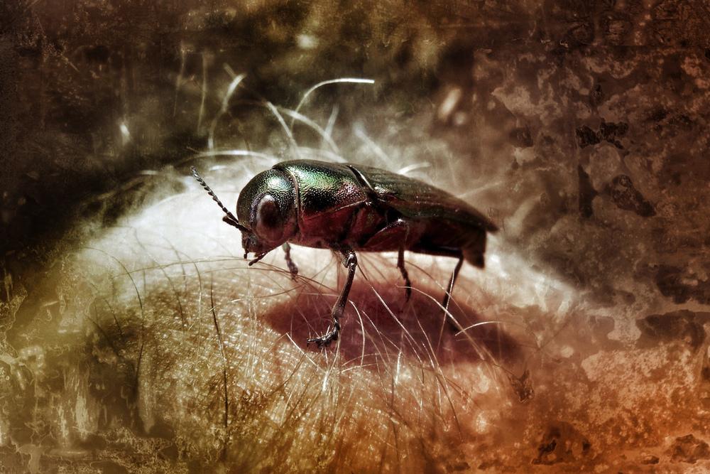 bug_0093.jpg