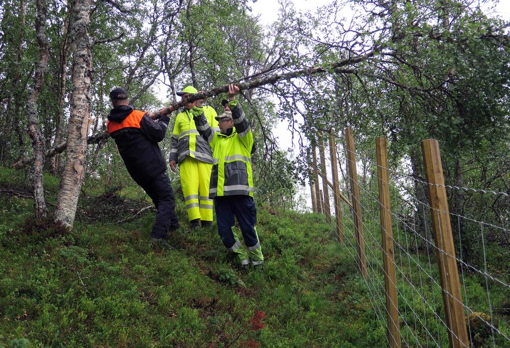 Ei vindfelt bjørk ble effektivt fjernet.Foto: A. Nyaas