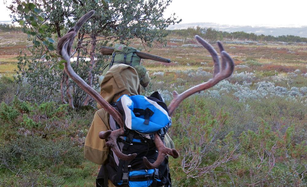 Årets fellingskvote i Forollhogna var 700 dyr. 581 ble felt. Det gir en fellingsprosent på 83. Arkivfoto: A. Nyaas