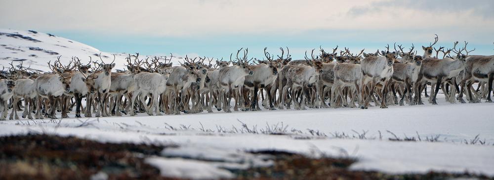 Denne fostringshopen ble fotografert ved Storensjøen. Foto: Kristin Lund Austvik