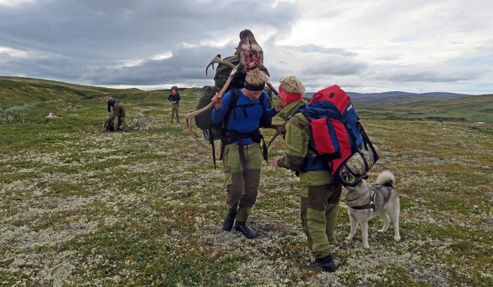 Frakt av storbukk skutt i Tverrfjelldalen i Dalsbygda søndag 28. august. Foto: Arne Nyaas