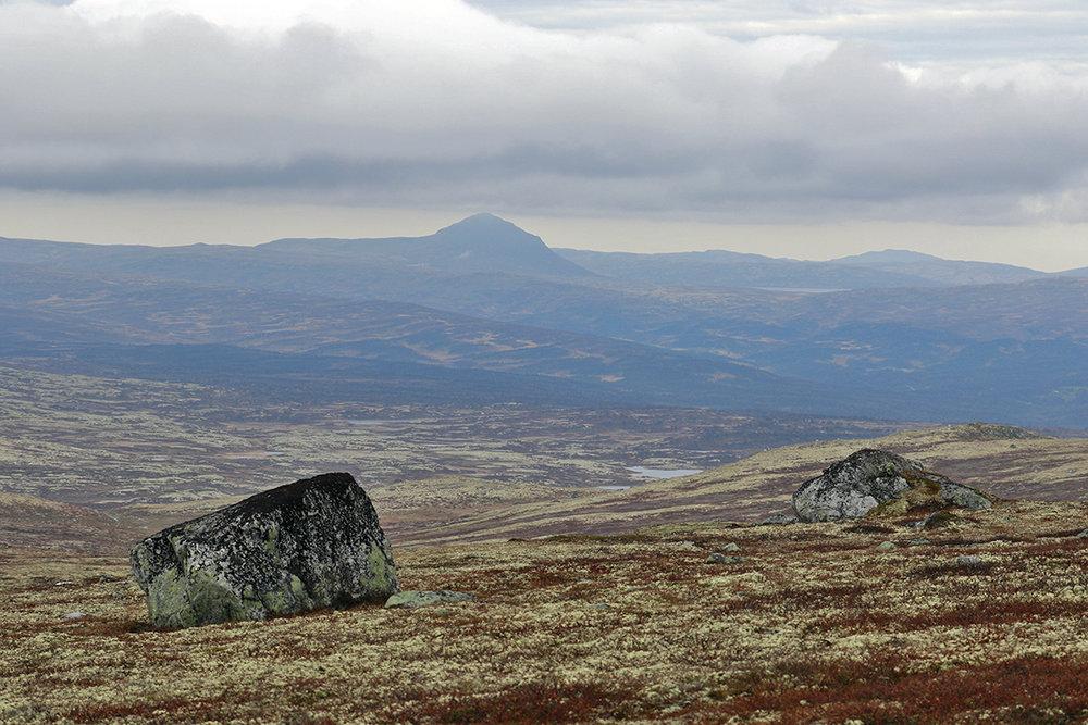 Mannen befant seg i dette området. Bildet er tatt på Midthogna med utsikt nordover til Forollhogna. Skarvdalen ned til høyre. Foto: Arne Nyaas